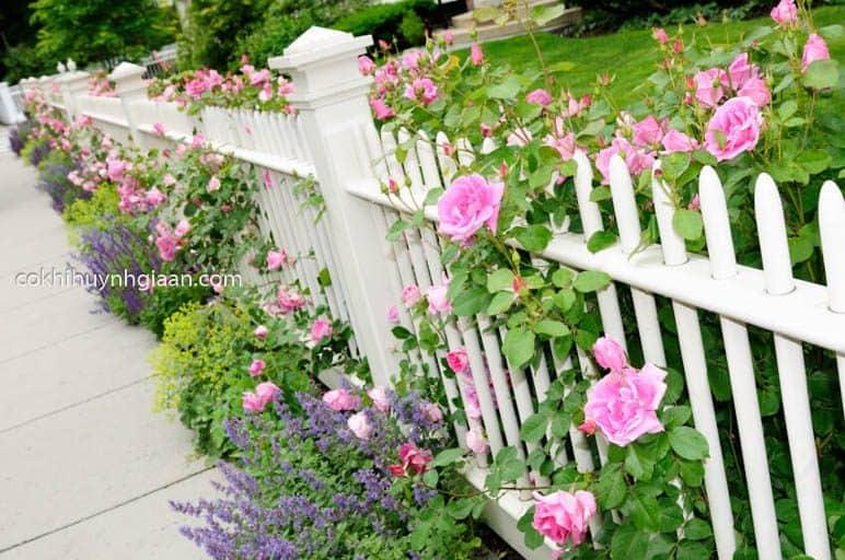 Hàng rào sắt đẹp kết hợp trồng hoa